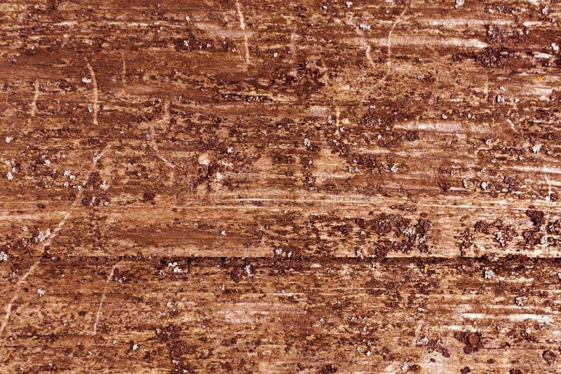 Grungy träboradyttersida med mossa arkivfoton
