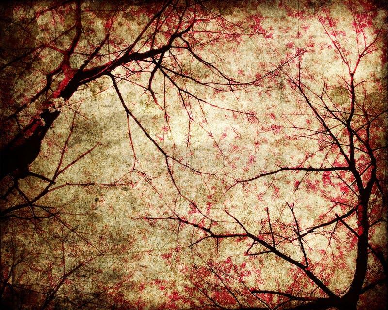 grungy tree för Cherry arkivbild