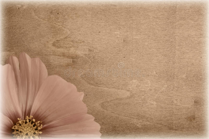 Grungy vintage flower stock photos
