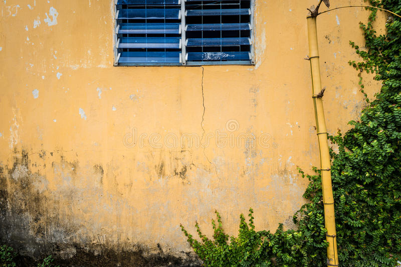 Grungy wall with window, bamboo and greenery. stock images