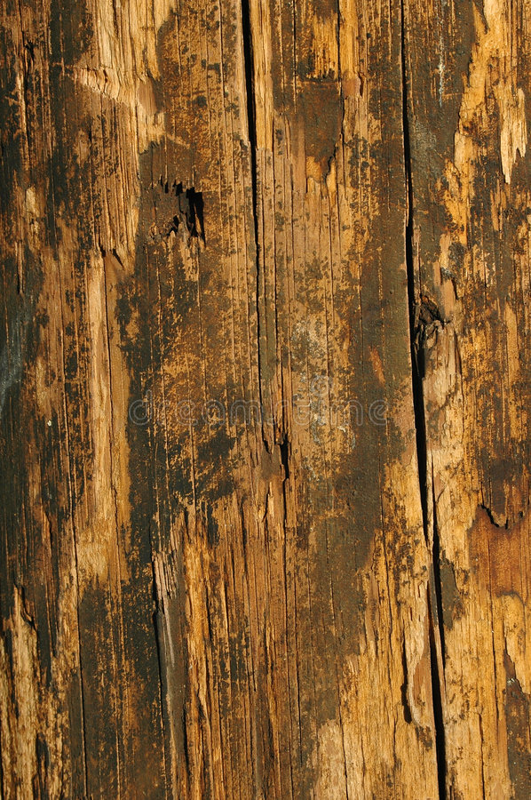 Grungy Wood in warn colors stock images