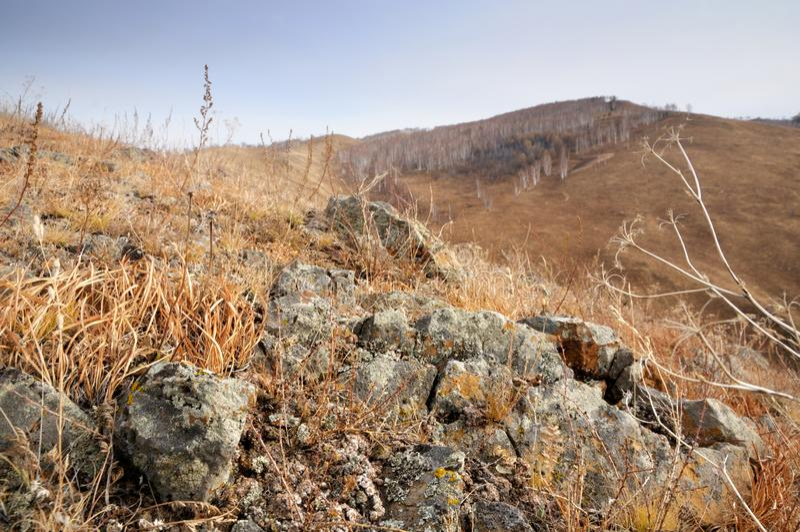 Grunt djup av fältsikten av vaggar stenar som täckas med laven som omges av gult höstgräs på försiktiga kullar royaltyfri bild