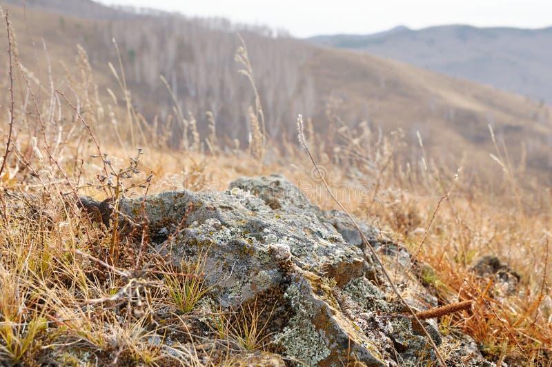 Grunt djup av fältsikten av vaggar stenar som täckas med laven som omges av gult höstgräs på försiktiga kullar fotografering för bildbyråer