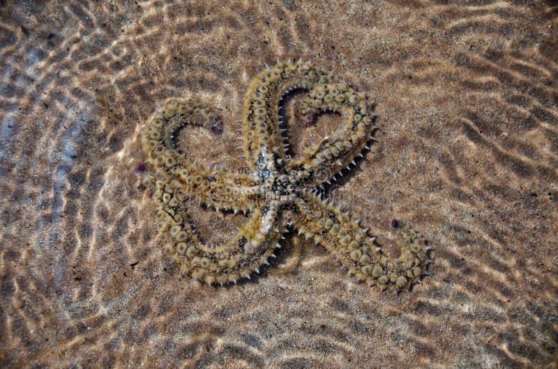 grunt sjöstjärnavatten royaltyfri foto
