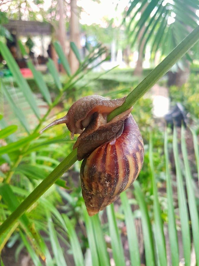 Gruntowy ślimaczek climbling obrazy stock