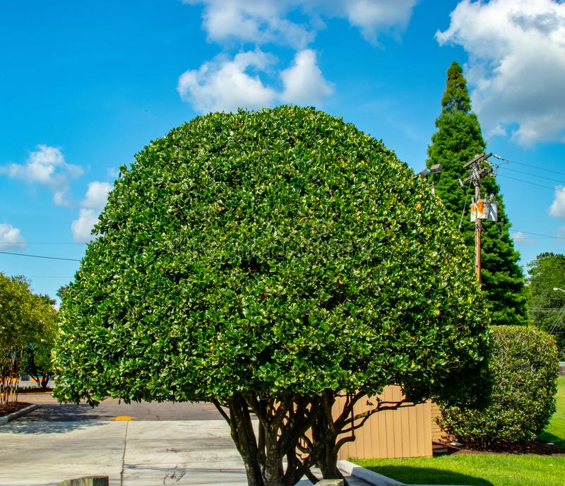 Gruntowych głąbików drzew round zieleni krzaki zdjęcia royalty free