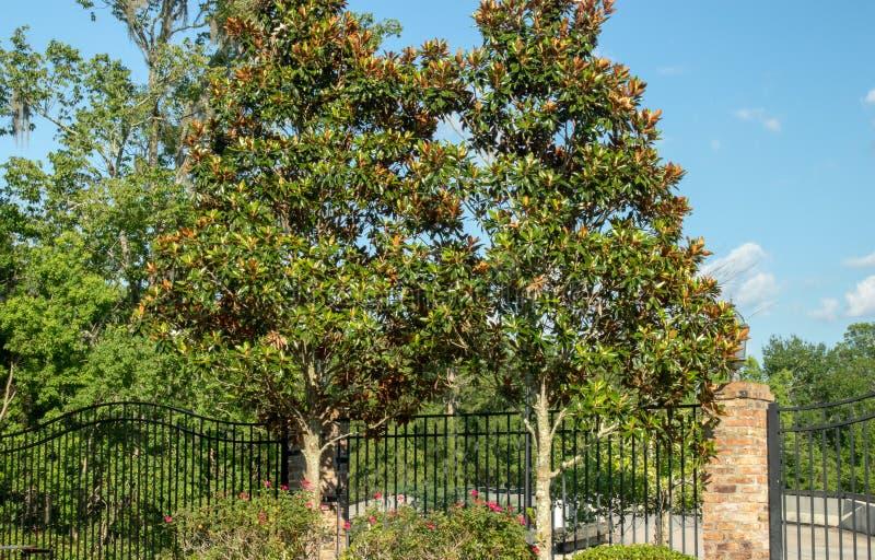 Gruntowych głąbików drzew round zieleni krzaki zdjęcia stock