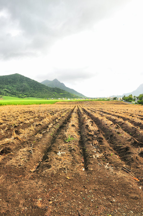 grunty rolne obrazy stock