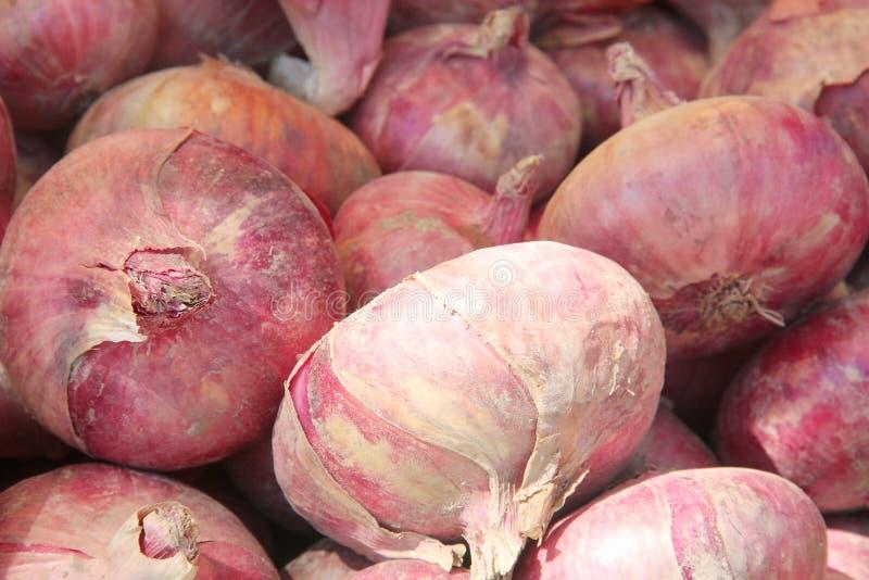 Grupa świeże unpeeled czerwonej cebuli żarówki zdjęcia stock