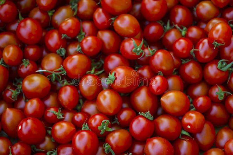 Grupa świezi malutcy pomidory fotografia royalty free