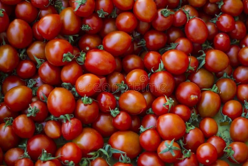 Grupa świezi malutcy pomidory fotografia stock