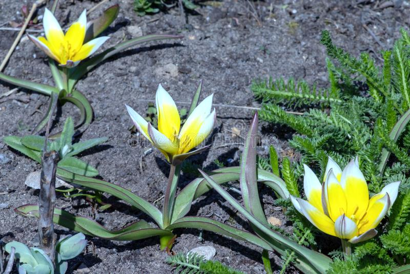 Grupa żółci, biali kwiaty i, obrazy stock