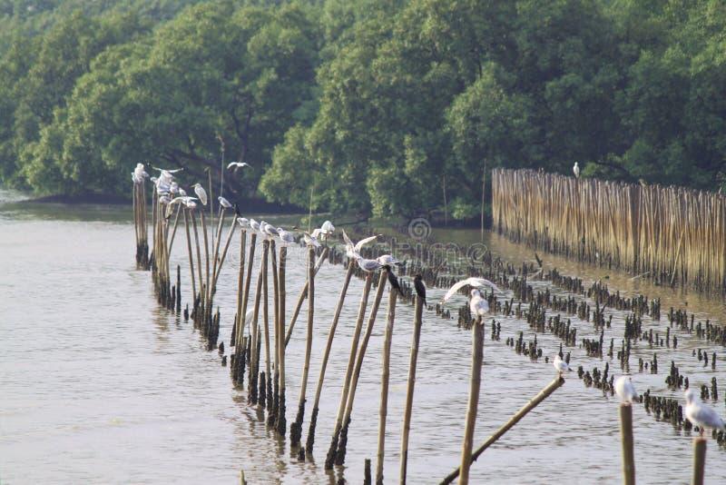 Grupa białego seagull ostrości pierwszoplanowa miękka pozycja na długim kiju zdjęcia royalty free