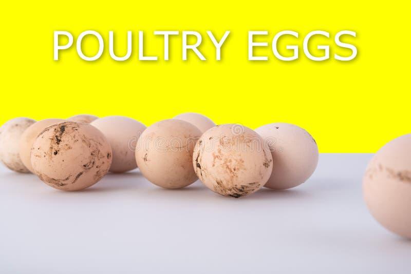 Grupa brudni kurczaków jajka na szarym tle z cieniami i tekstów drobiowymi jajkami na żółtym tle, zdrowa żywność obraz stock