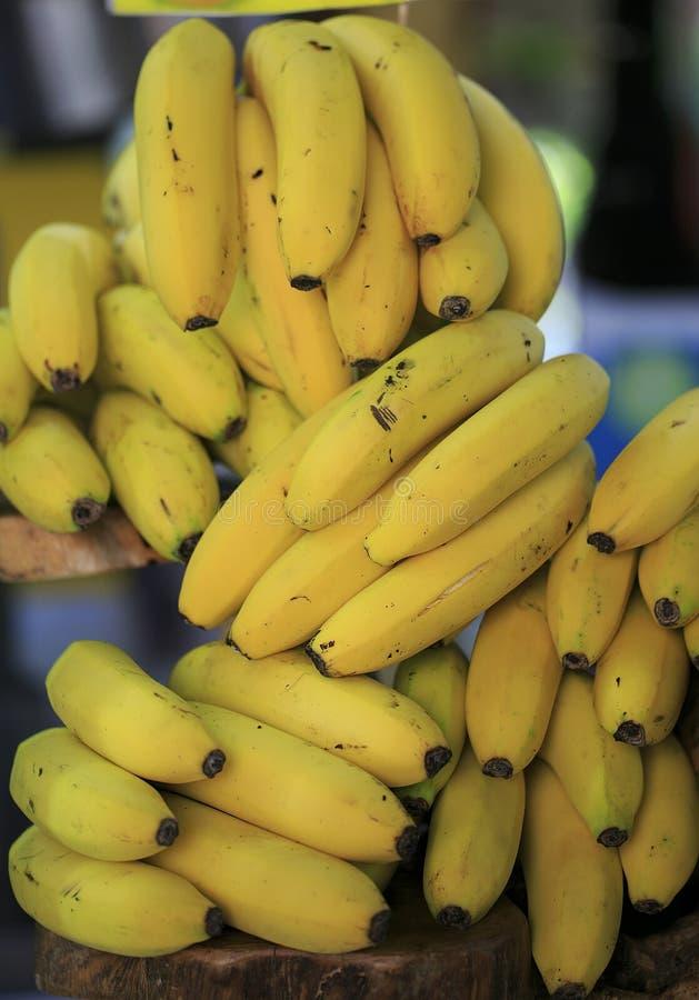 Download Grupa Canarian Wyspa Banany Zdjęcie Stock - Obraz złożonej z żywienioniowy, zdrowy: 106917654