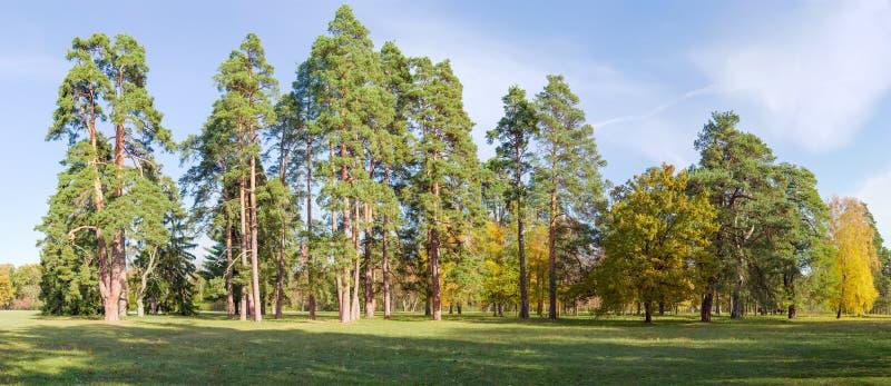 Grupa conifers i deciduous drzewa wśród wielkiej halizny fotografia stock