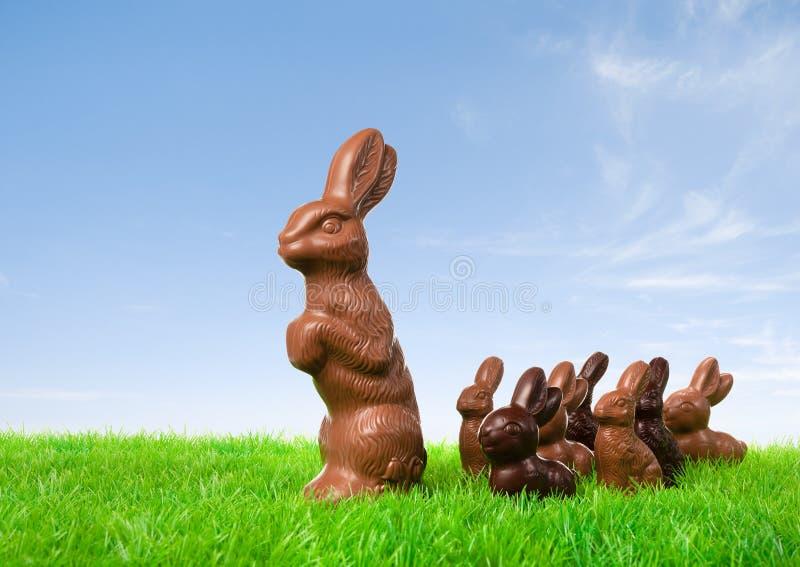 Czekoladowy królika prowadzić zdjęcie royalty free