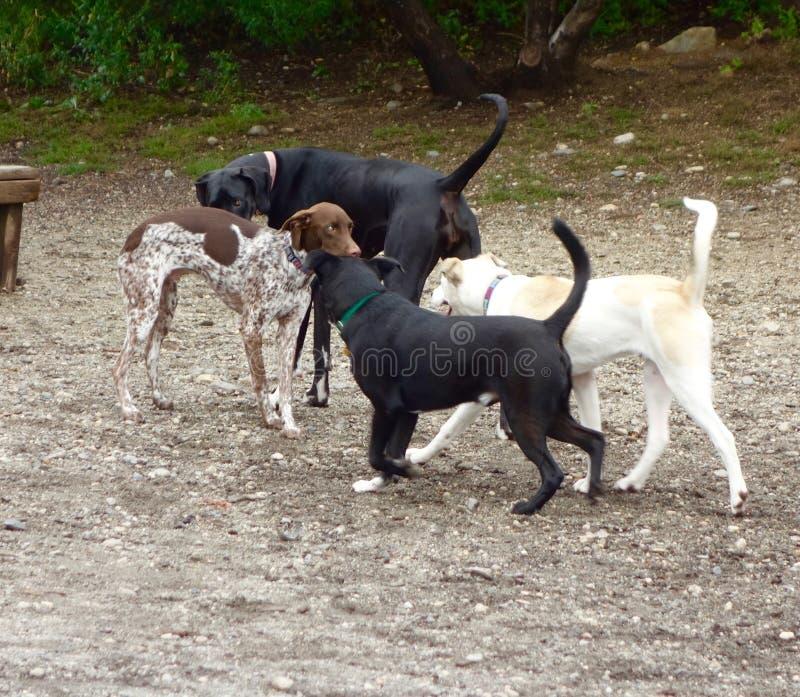 Grupa cztery dorosłego psa zamkniętego w gronie wpólnie zdjęcie royalty free