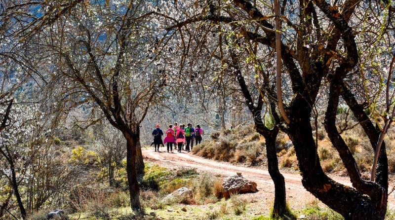 grupa dorosli ludzie chodzi obok kwiecistych drzew z zadziwia? z kolorowym plecakiem trekking na ?cie?ce piasek i kamienie obrazy stock