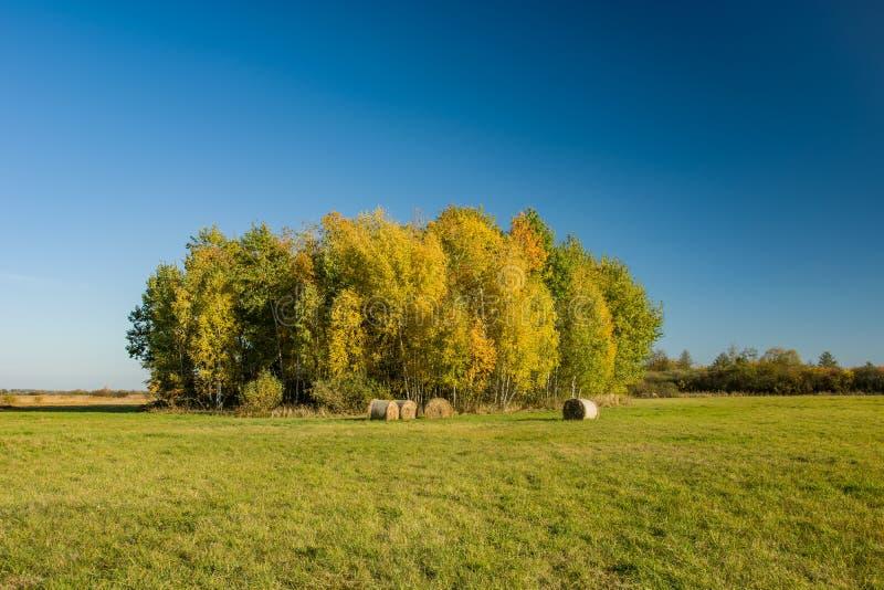 Grupa drzewa w jesieni niebieskim niebie i kolorach zdjęcia stock