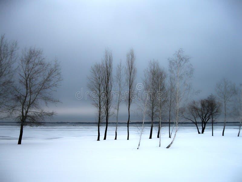 Grupa drzewa Zima Ukraina zdjęcia royalty free