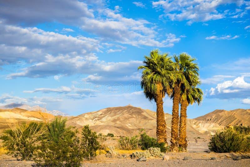 Grupa drzewka palmowe na góry i niebieskiego nieba tło, piec zatoczka, Śmiertelny Dolinny park narodowy, Kalifornia zdjęcie royalty free