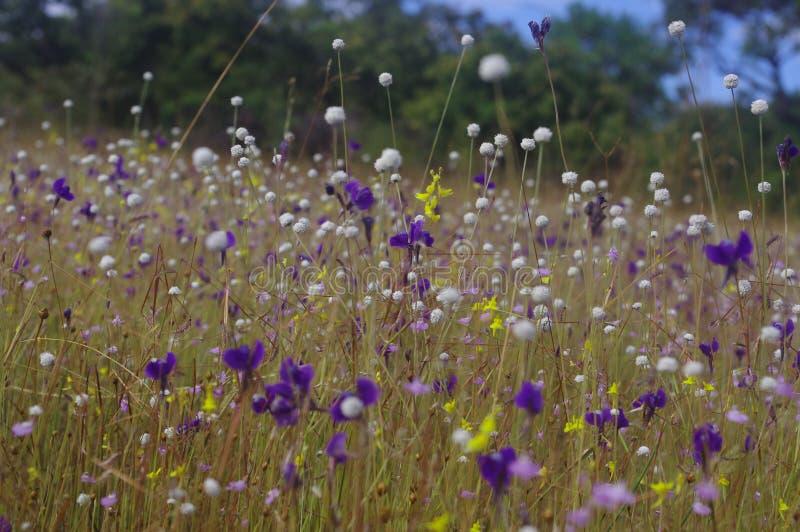Grupa dzicy kwiaty kwitnie pełno na polu fotografia stock
