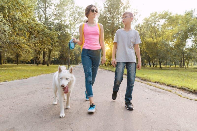 Grupa dzieci chodzi z białym husky psem, parkowy drogowy tło zdjęcie stock