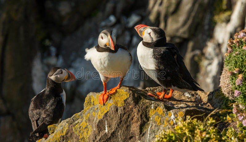 Grupa icelandic maskonury na rockowym wypuscie zdjęcia royalty free