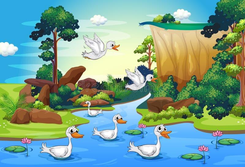 Grupa kaczki przy rzeką w lesie ilustracja wektor