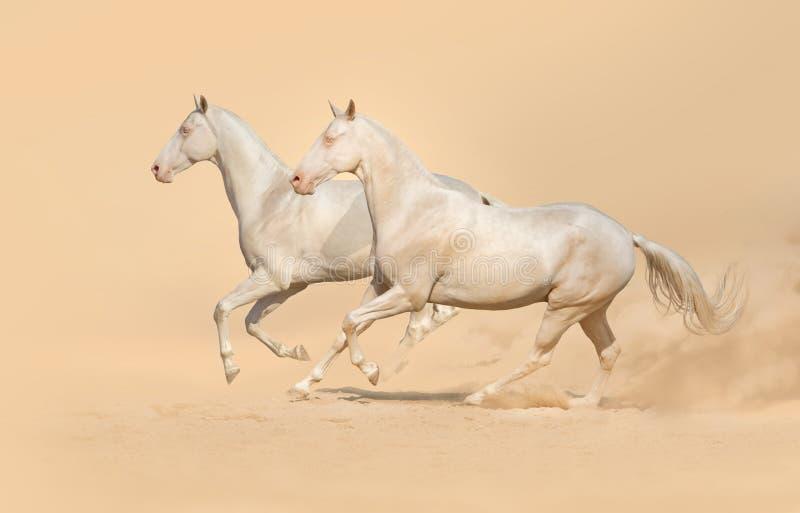 Grupa konia bieg zdjęcia royalty free