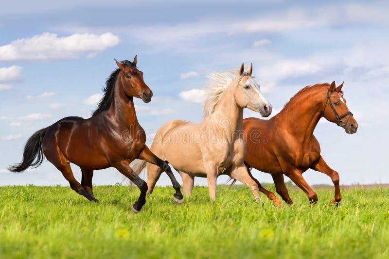 Grupa konia bieg zdjęcie stock