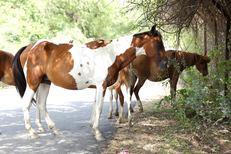 Download Grupa Konie Stoi Pod Cieniem Zdjęcie Stock - Obraz złożonej z greenbacks, brąz: 57653814