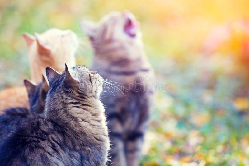 Grupa koty w jesień ogródzie obraz royalty free