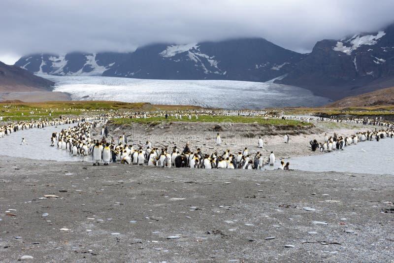 Grupa królewiątko pingwiny Wzdłuż brzeg rzekiego zdjęcia stock