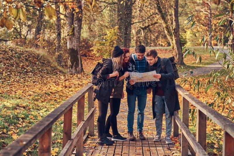 Grupa młodzi przyjaciele wycieczkuje w jesień kolorowym lesie, patrzejący mapę i planowanie podwyżkę fotografia royalty free