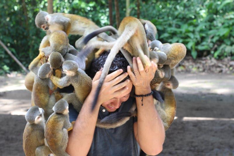 Grupa małpy atakuje mężczyzny fotografia stock