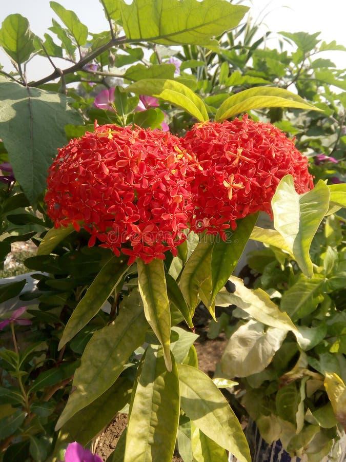Grupa mali kwiaty obraz stock