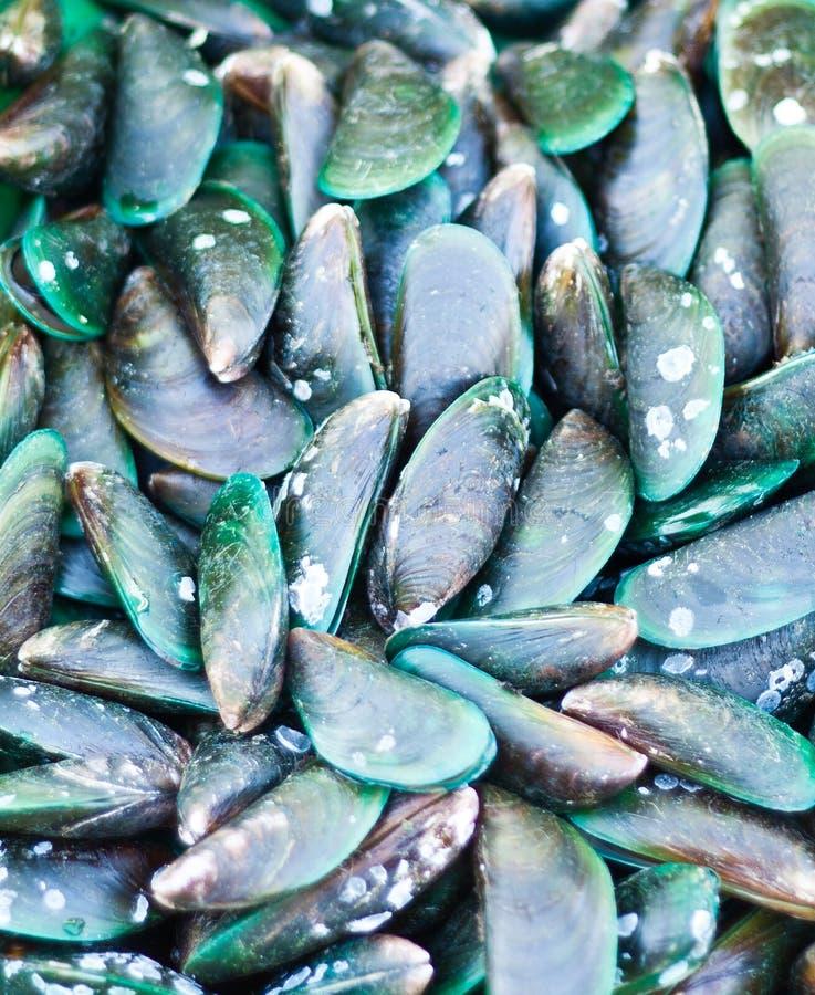 Nowa Zelandia wargi Zieleni Mussels obraz royalty free