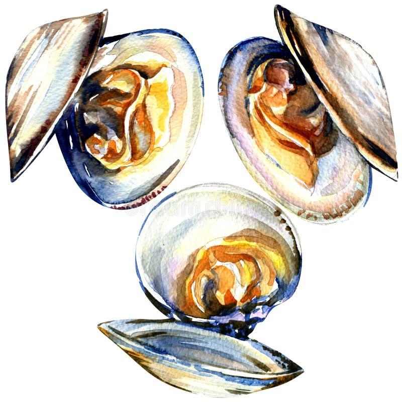 Grupa otwarci mussels odizolowywający na białym tle royalty ilustracja