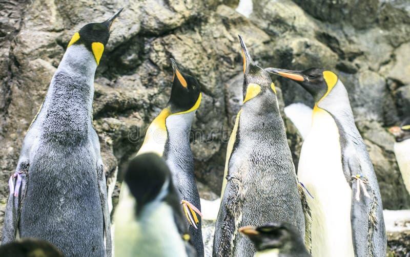 Download Grupa pingwiny w zoo obraz stock. Obraz złożonej z śmieszny - 106918707