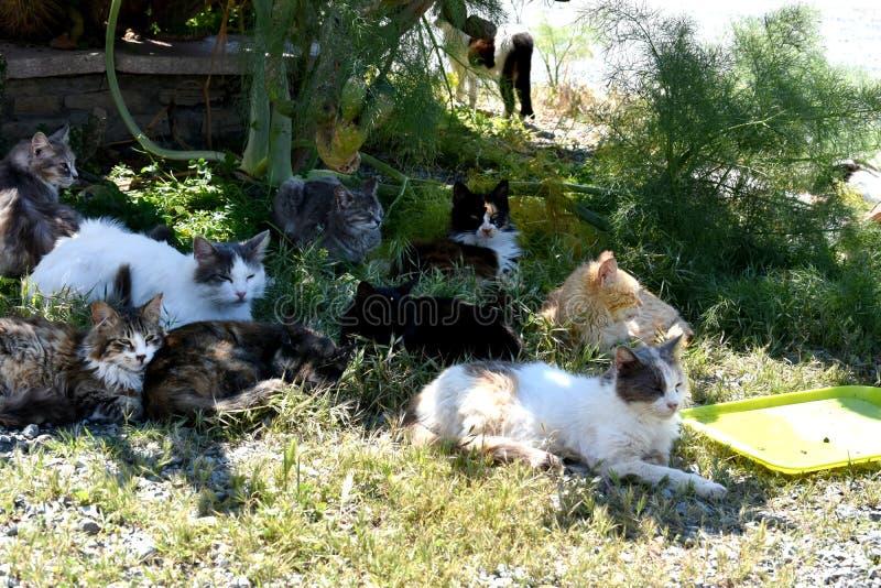 Grupa przybłąkani koty zdjęcia royalty free