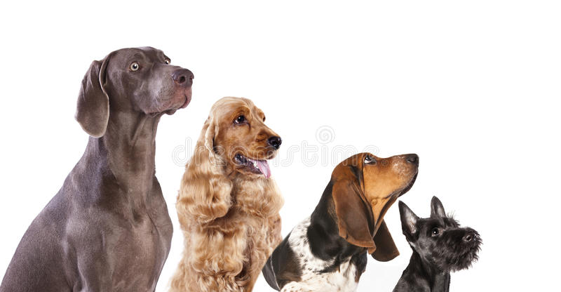 Grupa psy obrazy royalty free