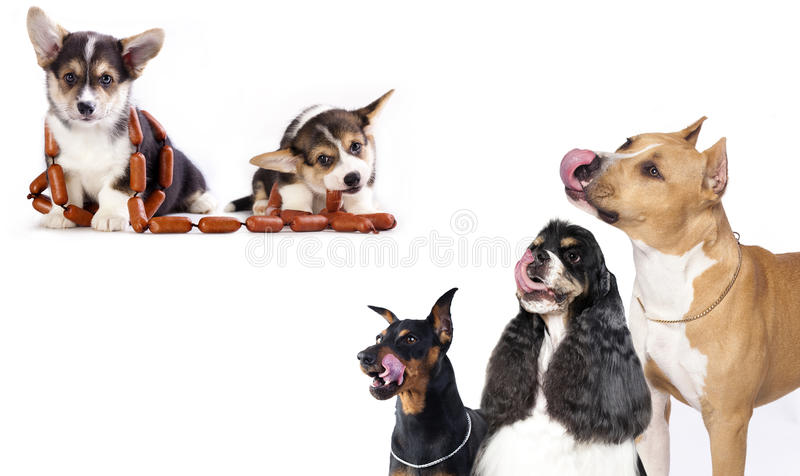 Grupa psy i kitens siedzieć zdjęcie stock