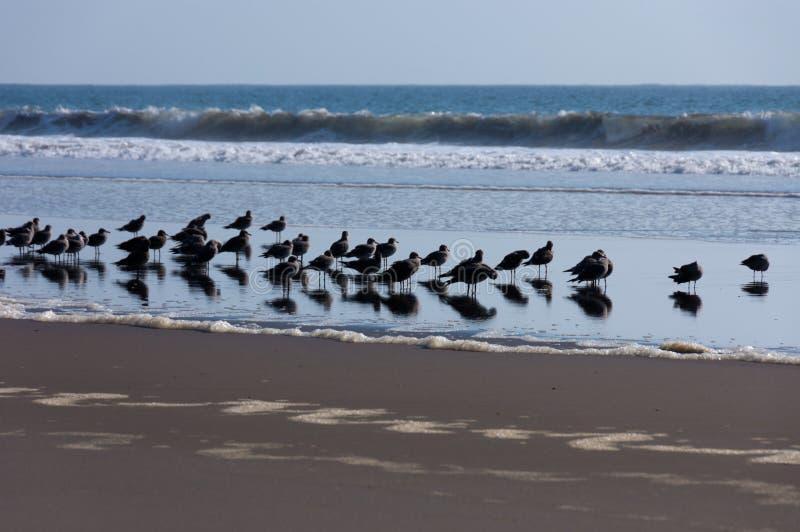 grupa ptaki obrazy royalty free