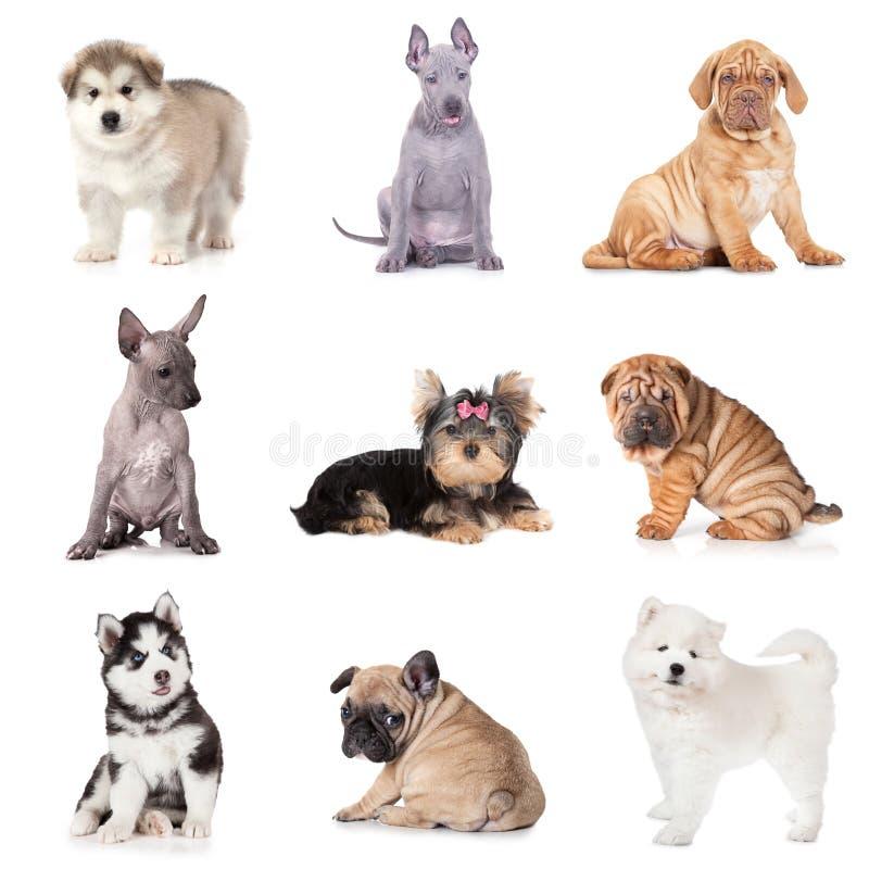Grupa różnorodni szczeniaków psy fotografia stock