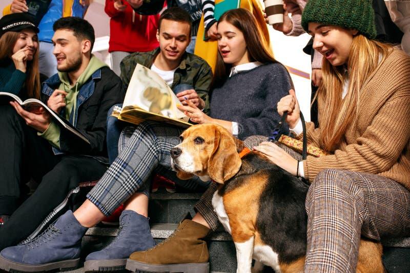Grupa rozochoceni szczęśliwi ucznie siedzi w odczytowej sali przed lekcją zdjęcia stock