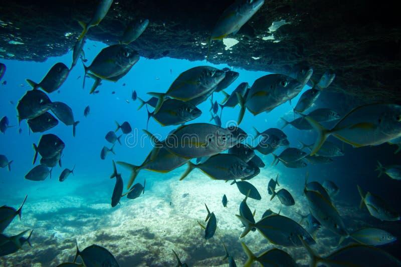Grupa ryba pływać obrazy stock