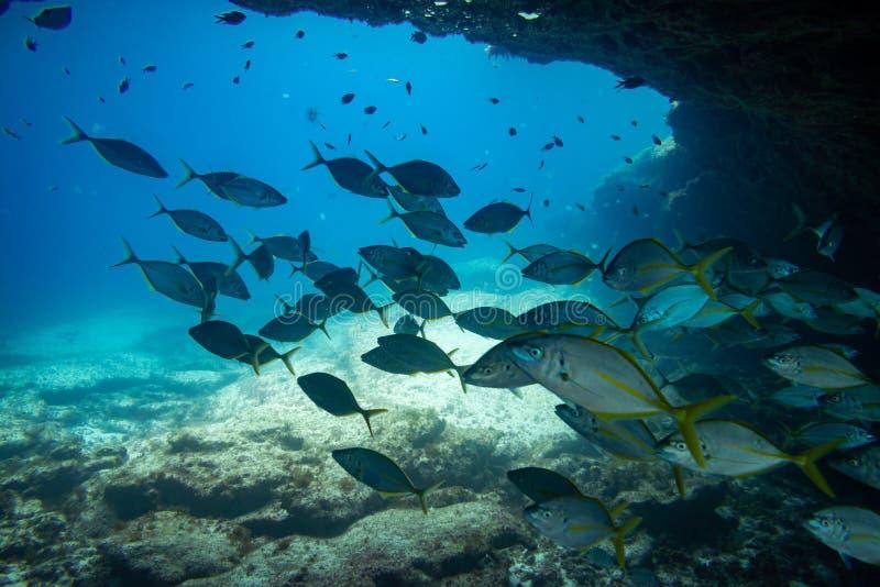 Grupa ryba pływać fotografia stock