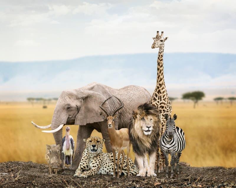 Grupa safari zwierzęcia przyjaciele obraz royalty free